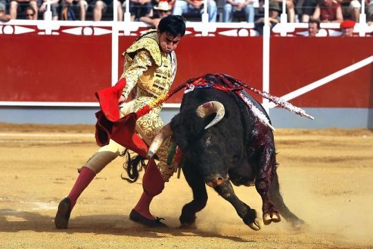 Нажмите на изображение для увеличения Название: personnage_corrida_sport_arenes_gironde_864258.jpg Просмотров: 31 Размер:38,6 Кб ID:18656
