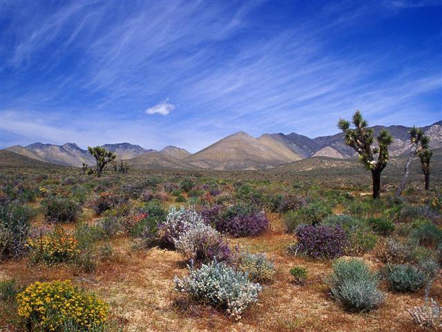 Нажмите на изображение для увеличения Название: 24330284_California_Desert1_Melkiy.jpg Просмотров: 46 Размер:67,4 Кб ID:21646