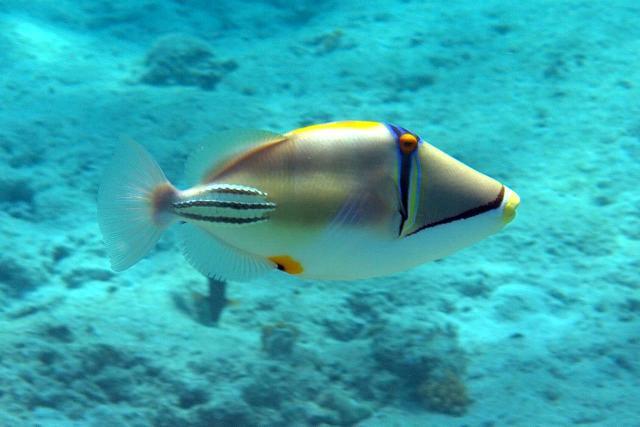 Нажмите на изображение для увеличения Название: tropic_fish_b.jpg Просмотров: 110 Размер:34,0 Кб ID:32351