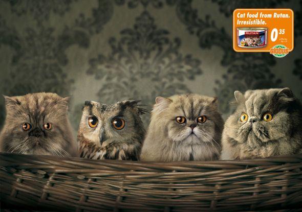 Нажмите на изображение для увеличения Название: Globus_Wannabe_Owl.preview.jpg Просмотров: 43 Размер:43,1 Кб ID:50664