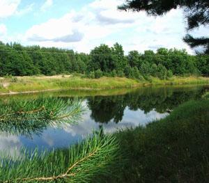 Нажмите на изображение для увеличения Название: Керженские лес.jpg Просмотров: 36 Размер:47,8 Кб ID:51277