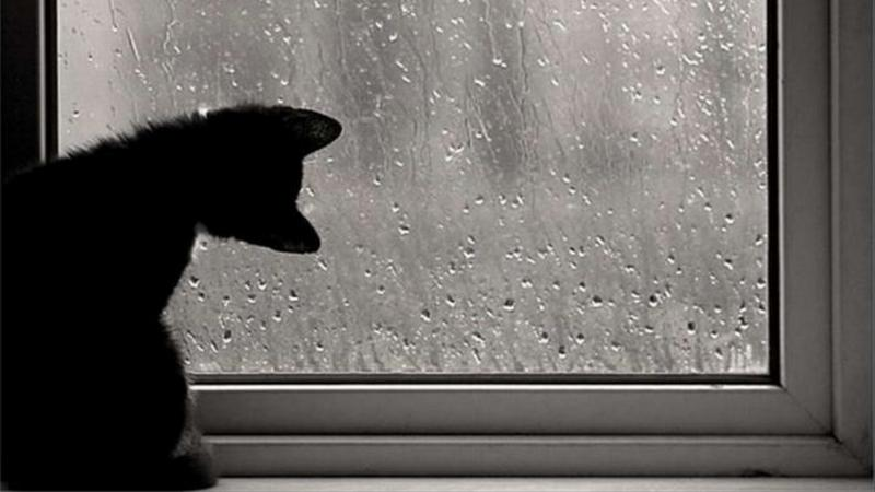 Нажмите на изображение для увеличения Название: кошка.jpg Просмотров: 34 Размер:41,3 Кб ID:51285