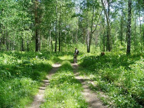 Нажмите на изображение для увеличения Название: forest-only-1-480.jpg Просмотров: 28 Размер:70,4 Кб ID:51405