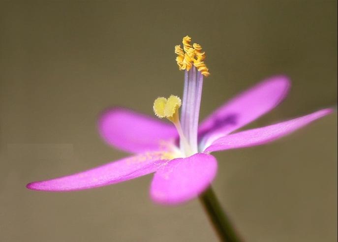 Нажмите на изображение для увеличения Название: Flower.jpg Просмотров: 38 Размер:52,5 Кб ID:51542