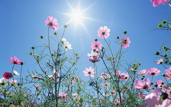 Нажмите на изображение для увеличения Название: 1440x900_Blue_Sky_Flowers_HM031_350A.jpg Просмотров: 19 Размер:88,1 Кб ID:51550