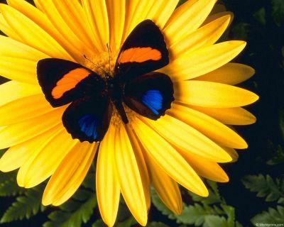 Нажмите на изображение для увеличения Название: normal_flowers01.jpg Просмотров: 14 Размер:26,6 Кб ID:51598