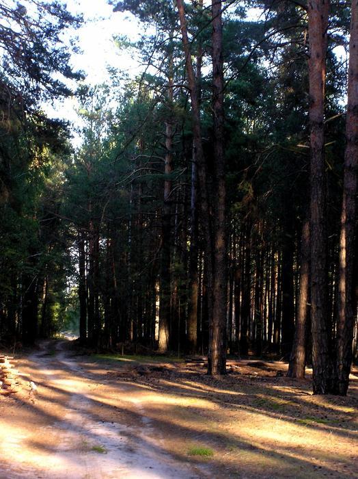 Нажмите на изображение для увеличения Название: Дорога-в-лесу-1234793100_82.jpg Просмотров: 17 Размер:91,3 Кб ID:51647