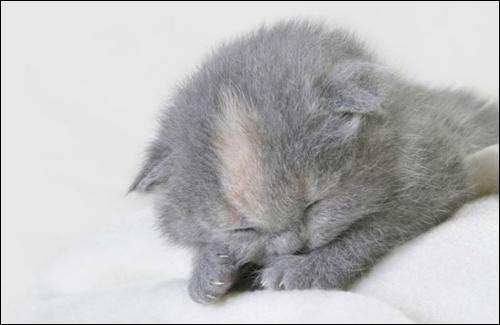 Нажмите на изображение для увеличения Название: котята13.JPEG Просмотров: 19 Размер:88,0 Кб ID:51788