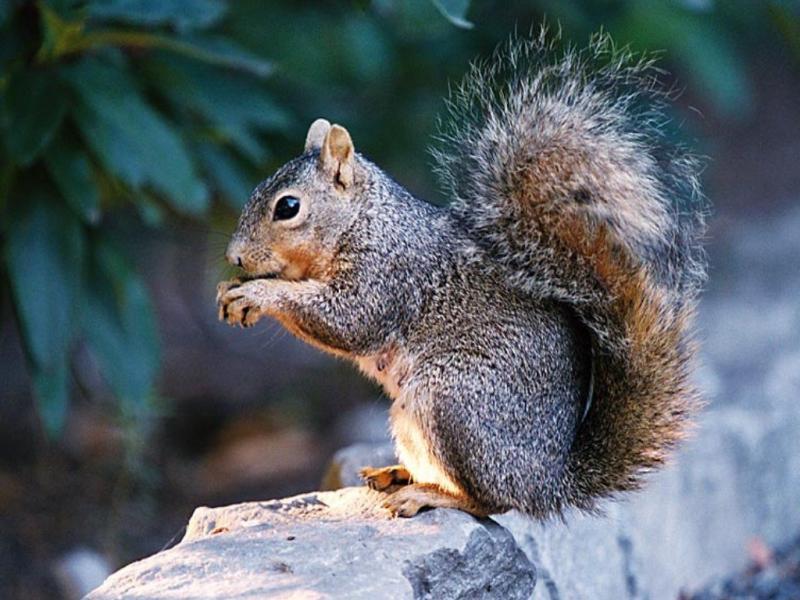 Нажмите на изображение для увеличения Название: animals3.jpg Просмотров: 19 Размер:77,4 Кб ID:52573