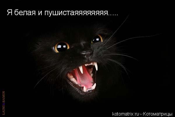 Нажмите на изображение для увеличения Название: 76885600_4059800_Black_cat_4_koteiko_ru.jpg Просмотров: 15 Размер:18,8 Кб ID:52674