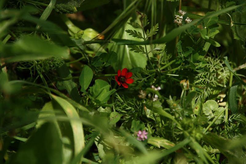 Нажмите на изображение для увеличения Название: Алый цветок.jpg Просмотров: 25 Размер:62,0 Кб ID:52766