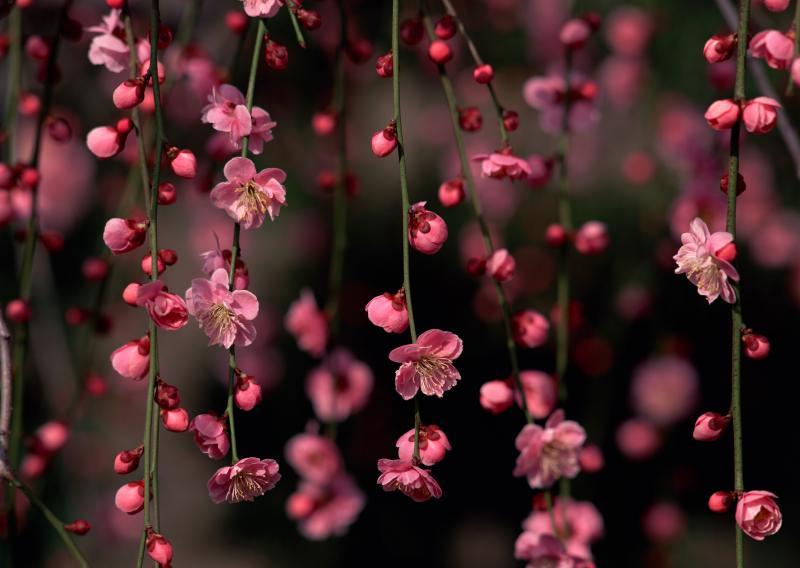 Нажмите на изображение для увеличения Название: short_flowers_tenderness.jpg Просмотров: 21 Размер:49,1 Кб ID:52820