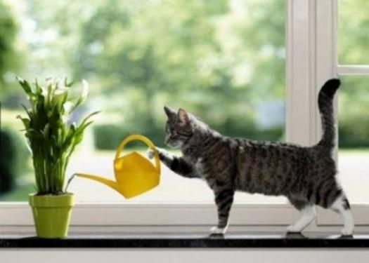 Нажмите на изображение для увеличения Название: cat-flowers.jpg Просмотров: 19 Размер:37,3 Кб ID:52932