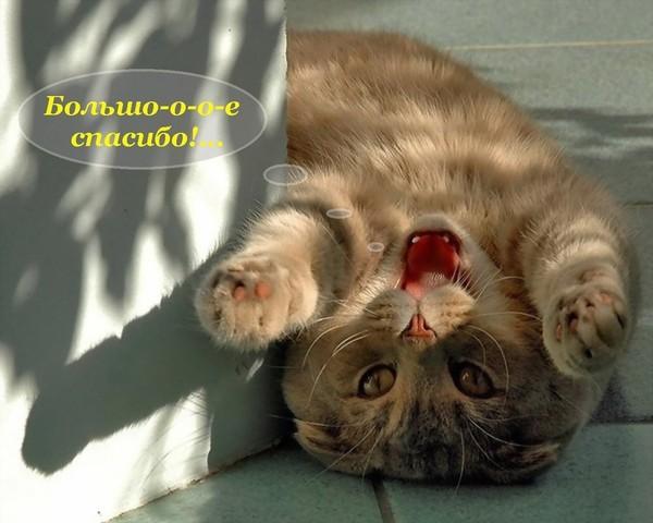 Нажмите на изображение для увеличения Название: 59280034_bolshoe_spasibo__koshka.jpg Просмотров: 23 Размер:63,2 Кб ID:53051