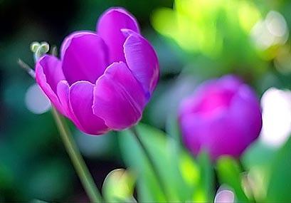 Нажмите на изображение для увеличения Название: beautiful-flowers.jpg Просмотров: 22 Размер:16,2 Кб ID:53111