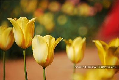 Нажмите на изображение для увеличения Название: flowers-web-design-718778.jpg Просмотров: 18 Размер:14,7 Кб ID:53113