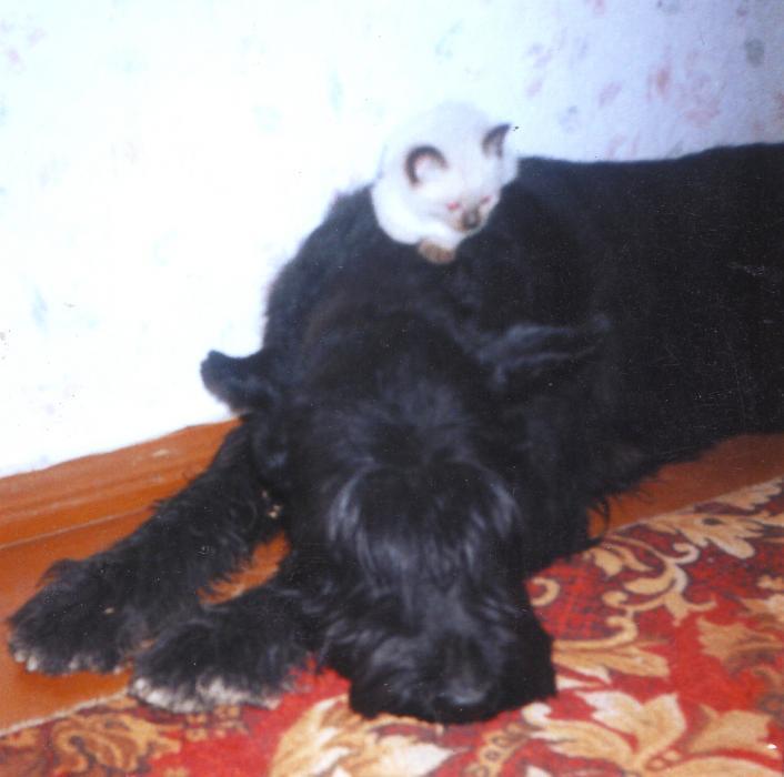 Нажмите на изображение для увеличения Название: роберта и котен.jpg Просмотров: 25 Размер:42,3 Кб ID:53181