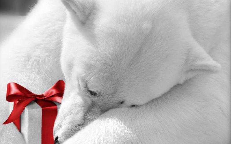 Нажмите на изображение для увеличения Название: Holidays_Christmas_wallpapers_Polar_bear_with_a_gift_019369_.jpg Просмотров: 18 Размер:37,7 Кб ID:53210