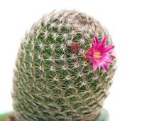 Нажмите на изображение для увеличения Название: cactus_1.jpg Просмотров: 38 Размер:11,3 Кб ID:53256