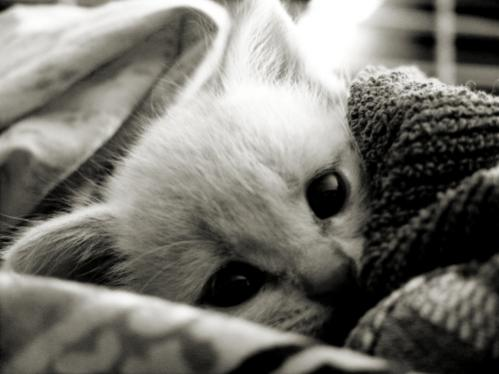 Нажмите на изображение для увеличения Название: Kitten_Smitten_by_lovelawlessly.jpg Просмотров: 11 Размер:24,0 Кб ID:53470