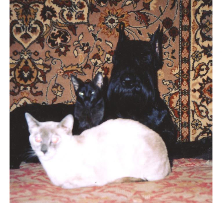 Нажмите на изображение для увеличения Название: буш и кошки копи.jpg Просмотров: 30 Размер:75,8 Кб ID:53640
