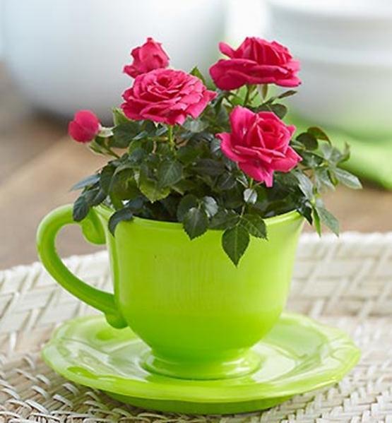 Нажмите на изображение для увеличения Название: 3269-1800flowers4.jpg Просмотров: 23 Размер:41,2 Кб ID:53972