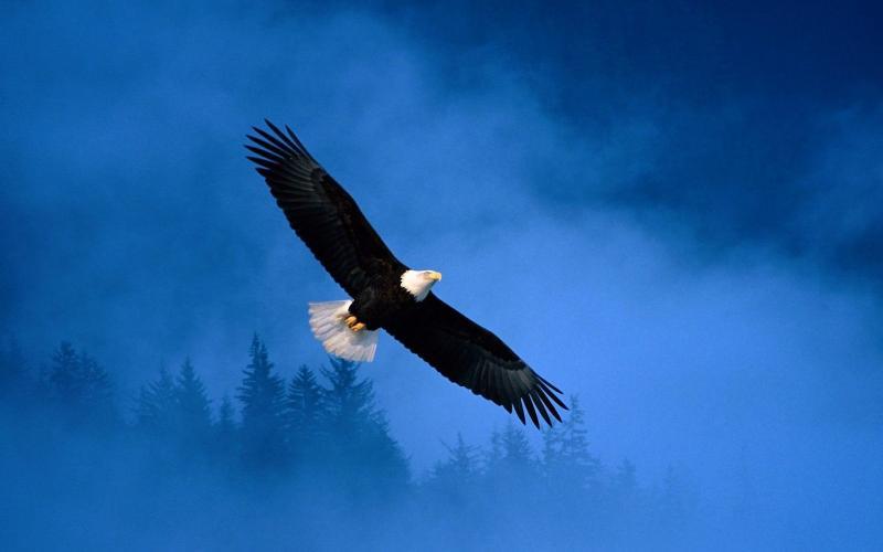 Нажмите на изображение для увеличения Название: flying-hawk-in-the-sky_85939-1920x1200.jpg Просмотров: 16 Размер:24,6 Кб ID:54025