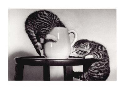 Нажмите на изображение для увеличения Название: cat-coffee-cup-twins.jpg Просмотров: 14 Размер:20,2 Кб ID:54031