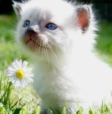 Нажмите на изображение для увеличения Название: funny_kittens45.jpg Просмотров: 18 Размер:32,4 Кб ID:54130