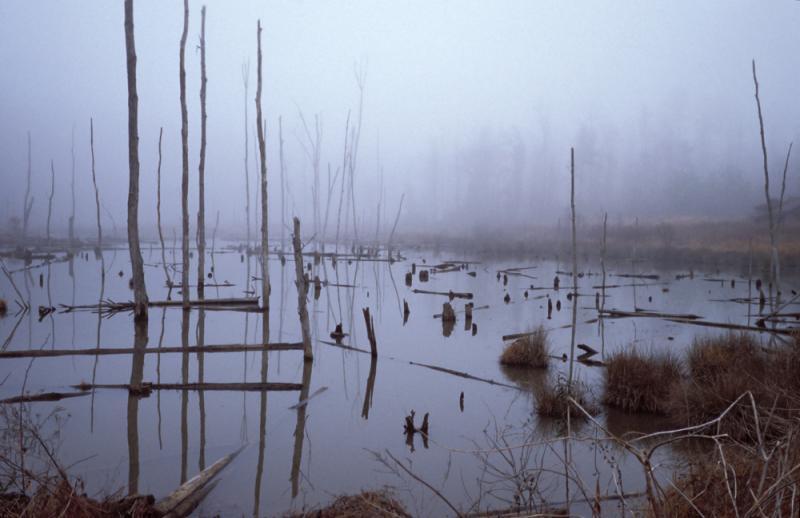 Нажмите на изображение для увеличения Название: mud-creek-swamp-in-fog.jpg Просмотров: 30 Размер:44,9 Кб ID:54164
