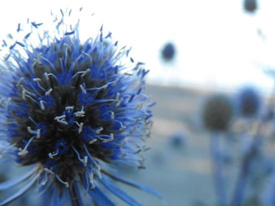 Нажмите на изображение для увеличения Название: lots-of-flowers-to-shoot.jpg Просмотров: 13 Размер:24,4 Кб ID:54564