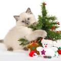 Название: Открытка Новый год - Год Кота или кролика7.jpg Просмотров: 86  Размер: 5,5 Кб