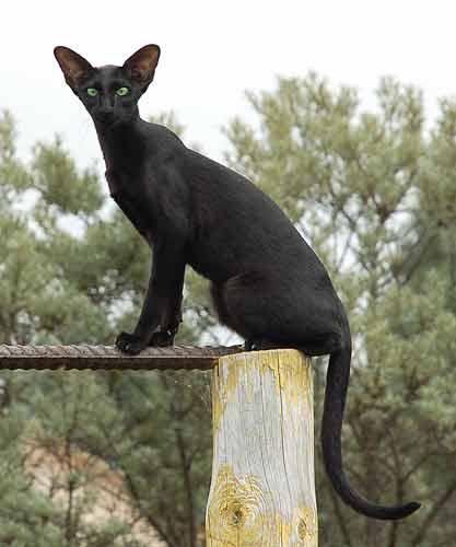 Нажмите на изображение для увеличения Название: cat_744_400.jpg Просмотров: 15 Размер:16,4 Кб ID:54858