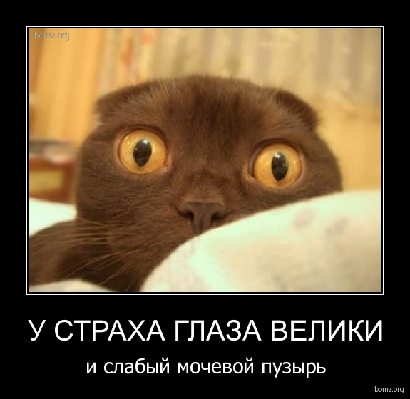 Нажмите на изображение для увеличения Название: 140028-2010.10.20-11.30.07-bomz.org-demotivator_u_straha_glaza_veliki_i_slabiyyi_mochevoyi_puziyr.jpg Просмотров: 48 Размер:106,4 Кб ID:55208