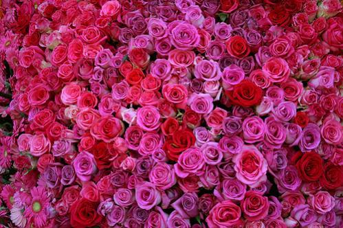 Нажмите на изображение для увеличения Название: rose.jpg Просмотров: 14 Размер:51,9 Кб ID:55490