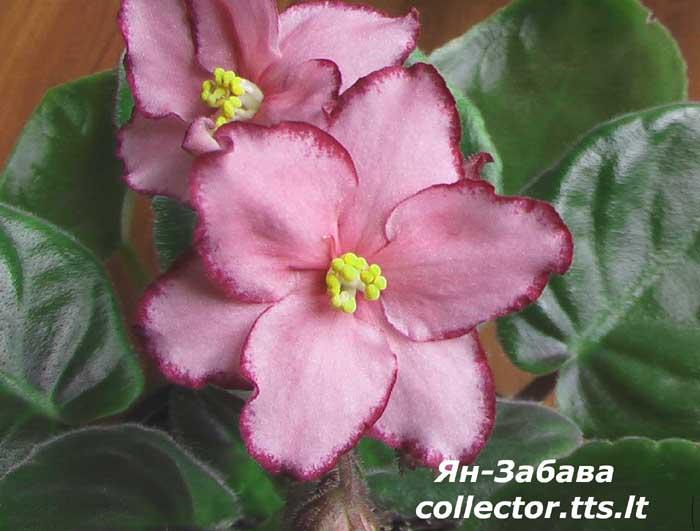 Нажмите на изображение для увеличения Название: Jan-Zabava.jpg Просмотров: 14 Размер:45,7 Кб ID:55504