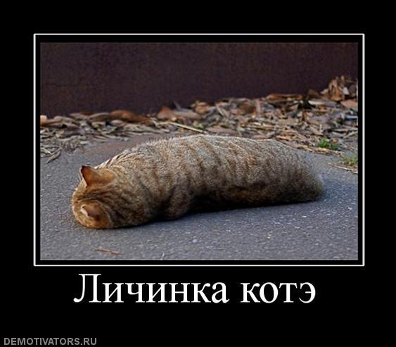 Нажмите на изображение для увеличения Название: 327498_lichinka-kote.jpg Просмотров: 33 Размер:37,5 Кб ID:55544