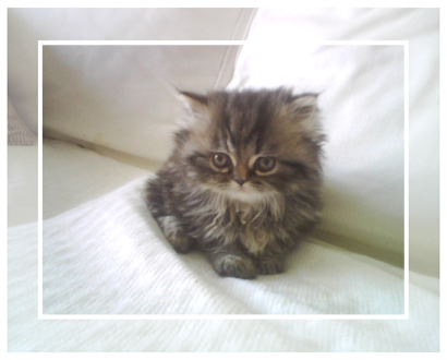 Нажмите на изображение для увеличения Название: gray-kitten.png Просмотров: 74 Размер:155,0 Кб ID:56135