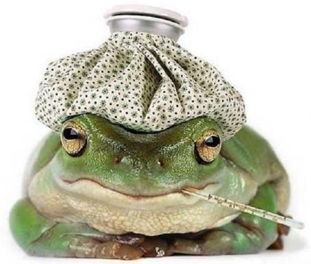 Нажмите на изображение для увеличения Название: 1 жаба.jpg Просмотров: 22 Размер:46,9 Кб ID:56522