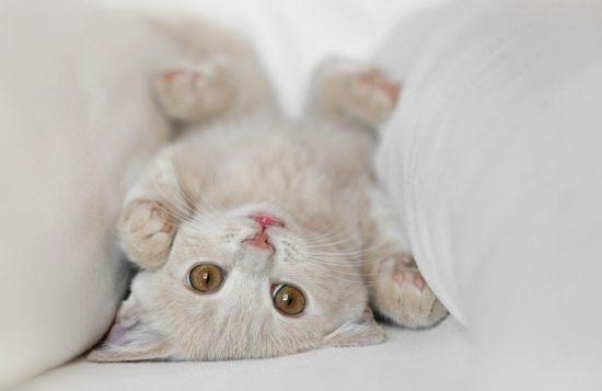 Нажмите на изображение для увеличения Название: cats_01.jpg Просмотров: 24 Размер:15,3 Кб ID:56830