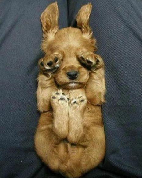 Нажмите на изображение для увеличения Название: puppy.jpg Просмотров: 23 Размер:43,4 Кб ID:56921