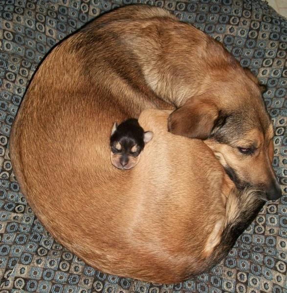 Нажмите на изображение для увеличения Название: dogs.jpg Просмотров: 24 Размер:148,4 Кб ID:57466