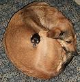 Нажмите на изображение для увеличения Название: dogs.jpg Просмотров: 27 Размер:148,4 Кб ID:57466