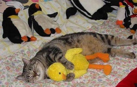 Нажмите на изображение для увеличения Название: cat-2_preview.jpg Просмотров: 22 Размер:35,2 Кб ID:57902