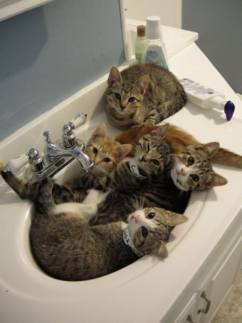 Нажмите на изображение для увеличения Название: cats.jpg Просмотров: 27 Размер:76,0 Кб ID:57963