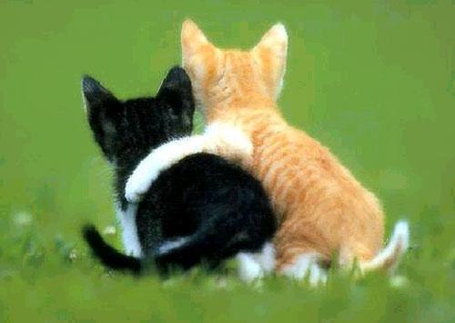 Нажмите на изображение для увеличения Название: friends-cats-large.jpg Просмотров: 42 Размер:27,0 Кб ID:58002
