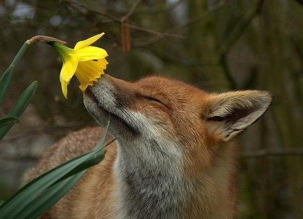 Нажмите на изображение для увеличения Название: fox.jpeg Просмотров: 38 Размер:53,6 Кб ID:58114
