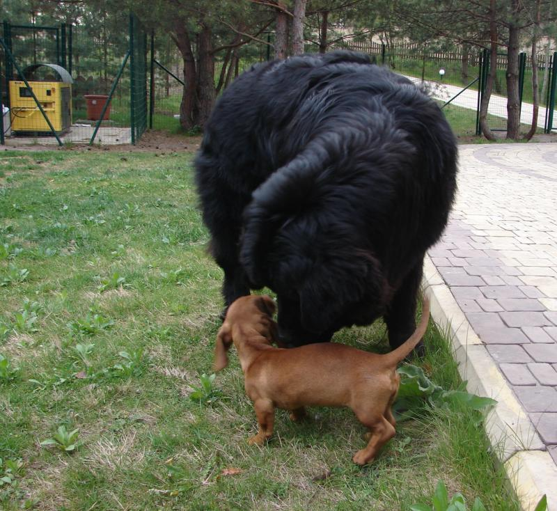 Нажмите на изображение для увеличения Название: dog-vesna.jpg Просмотров: 27 Размер:116,2 Кб ID:58132