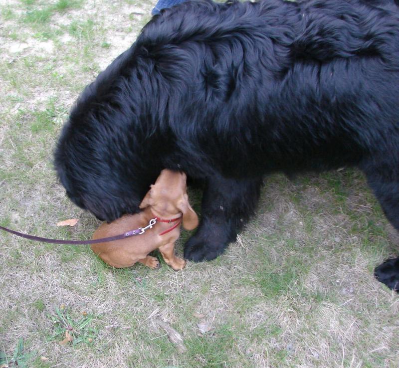 Нажмите на изображение для увеличения Название: dog-vesna2.jpg Просмотров: 28 Размер:113,2 Кб ID:58134