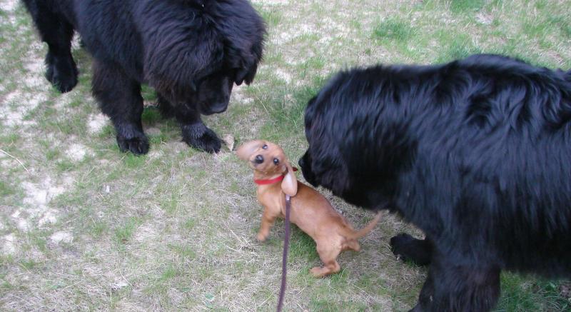 Нажмите на изображение для увеличения Название: dog-vesna3.jpg Просмотров: 29 Размер:66,1 Кб ID:58135